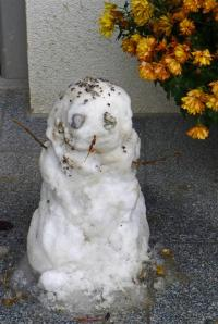 Sneeuwduif