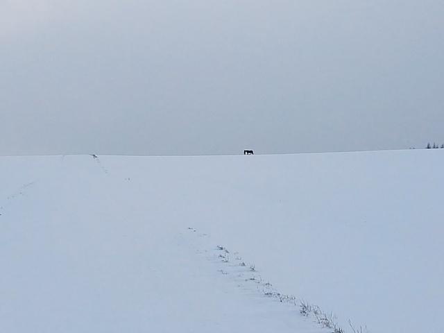 Paard in zicht! #Sneeuwzee