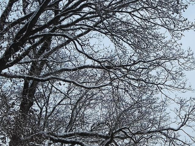 Sneeuw14